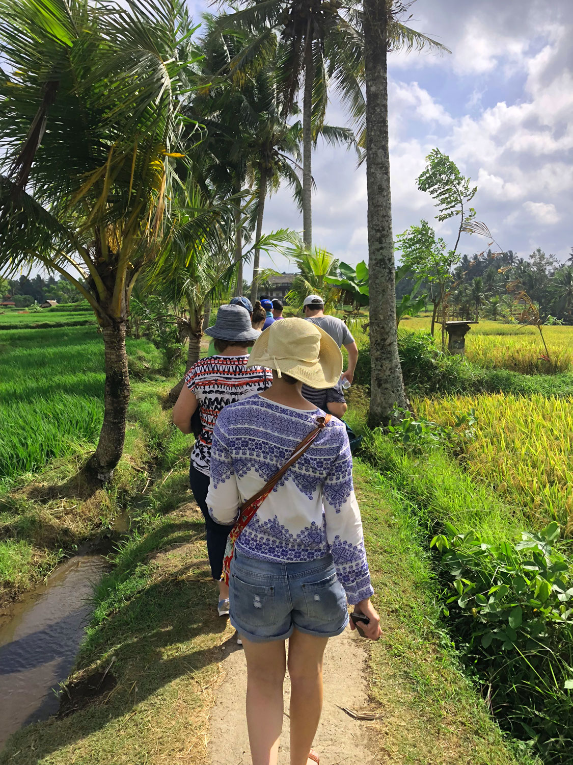A Walk In The Rice Fields From Rp 300000